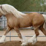 Рыжий конь с белой гривой