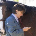 Лечение лошади