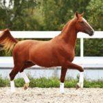 Красивый конь бежит