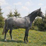 Мышастая лошадь темного окраса