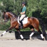 Ганноверская лошадь происхождение и развитие