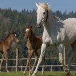 Молодая лошадь и жеребята