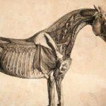 Вид скелета животного