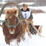 Мезенских лошадей используют в сельском хозяйстве