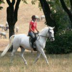 Липпицианский конь используется в верховой езде
