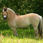 Желтая лошадка