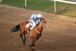 Конь американский