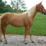 Лошадь соловой масти