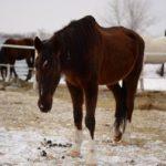 Лошадь болеет