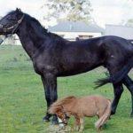 Лошади разного веса