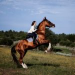 Конь в верховой езде