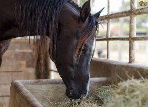 Питание лошади