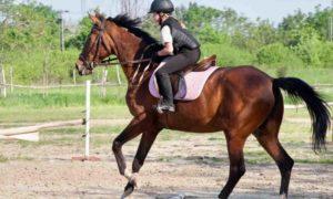 Как приручить лошадь