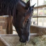 Конь ест сено