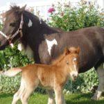 Лошади с разным весом