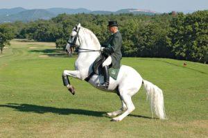 Всадник на липицианском коне