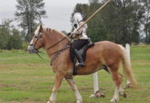 Конь и всадник