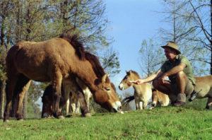 Приручение лошадей