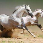 Максимальная скорость коней