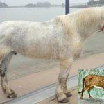 Предок лошади - эогиппус