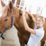 Лошадь чистят щетками