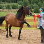 Дрессировка лошади мезенской породы