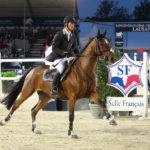 Конь в конном спорте
