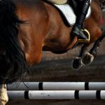 Копыта лошади с подковами