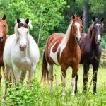 Разведение разных лошадей