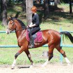 Иноходец гнедой масти в конном спорте