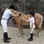 Маленькая легковесная порода лошадки
