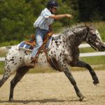 Аппалузский конь на скачках