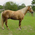 Конь рыжей масти