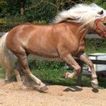 Темно-песочный отлив шерсти коня