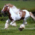 Конь с белыми пятнами
