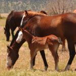 Лошади разных возрастов