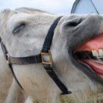 Здоровые зубы у кобылы