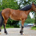 Лошадь с черной гривой и хвостом