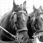 Полузакрытые наглазники для лошадей