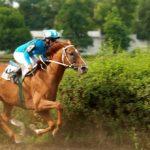 Скакун в конном спорте