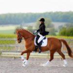 Использование лошади в конном спорте