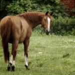 Необъезженная лошадка