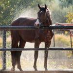 Лошадь поливают водой