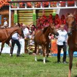 Терские лошади на конных соревнованиях