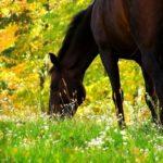 Конь пасется на лугу
