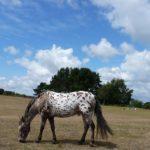 Конь с мелкими темными пятнами