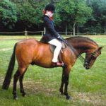 Каспийский конь для верховой езды