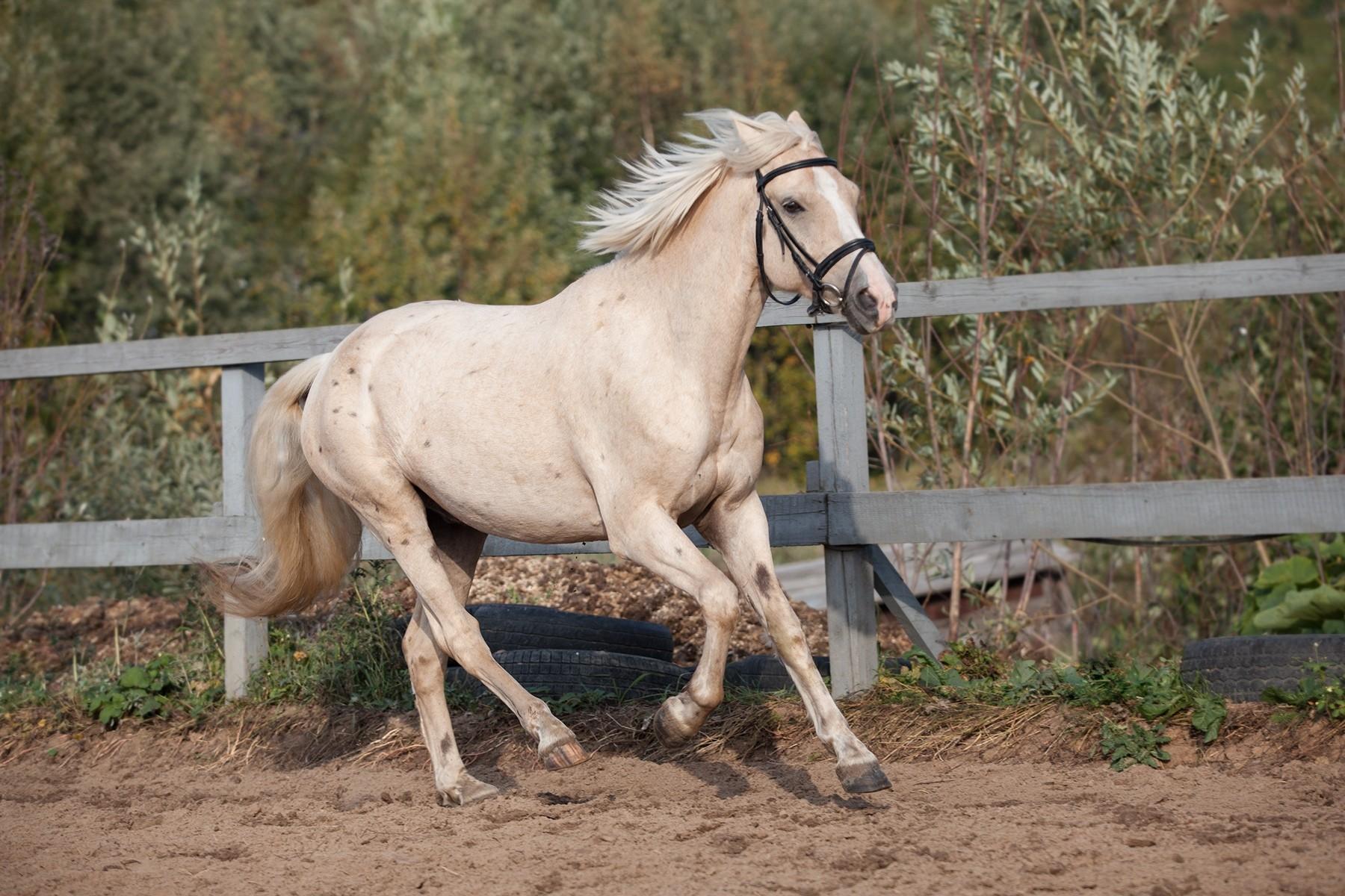 слава фото бежевых коней светильник