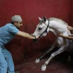 Лечение больной лошади