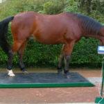 Специальные весы для взвешивания сельскохозяйственных животных